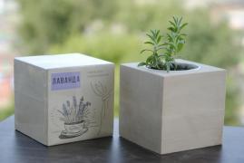 Купить экокуб, растущие карандаши, нанесение лого, опт